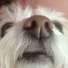 Looks like Dudley's dog nose
