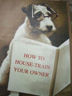 How to House Train Your Owner - the author is a personal friend :) x