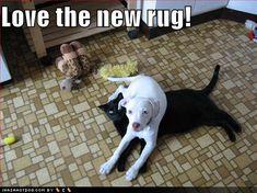 haha poor kitty