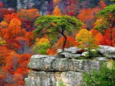 Fall colors (1) From: Ecologia Verde, please visit