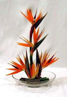 Birds of Paradise in Low Container - Tropical Flowers, Tropical Flower Arrangements, Creative Flower Arrangements, Church Flower Arrangements, Beautiful Flower Arrangements, Exotic Flowers, Beautiful Flowers, Purple Flowers, Lilies Flowers