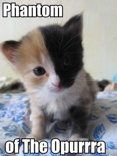 Years ago my cat had a kitten that looked like this. I named him Patch and was sad when he got old enough to give away. I would love another kitten that looks like this.