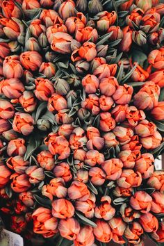 Flowers photography tulips flora 68 Ideas for 2019 Wallpapers Texture, Floral Wallpapers, Flowers Nature, Beautiful Flowers, Tulips Flowers, Orange Flowers, Paper Flowers, Drawing Flowers, Bouquet Flowers