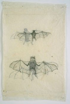 Kiki Smith, Untitled, 1999 More layered transparencies: tissue paper?