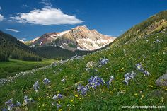 Views of the Mountains with Rocky Mountain Columbine, Colorado's State flower.