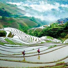 Rice terraces of Longji, China- 2 hours from Guilin. May or June for irrigated fields