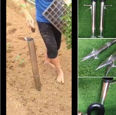 Seedling starter.