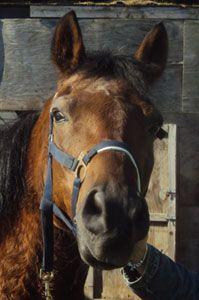 dino jij bent en blijft altijd mijn pony/paard ik hou zo veel van je dat ik je egt niet kwijt kan jij bent mijn hart xx <3