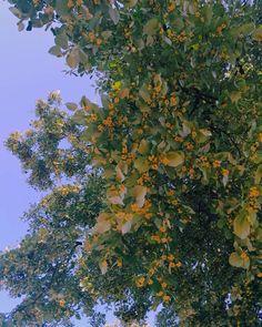"19 aprecieri, 1 comentarii - Georgeana G. Aciobăniței (@georgeanagaciobanitei) pe Instagram: ""linden flowers. the sweetest and strongest perfume. 💚"""