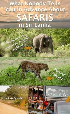 I did loads of research on the best places to see elephants and leopards in Sri Lanka, and booked two safaris. Yet, despite all my research, I really had no idea what to expect on the safaris themselves. What should I wear? What is the proper safari etiquette? To save you from having to guess like I did, here are the things I wish I would have known before my first Sri Lankan safari.