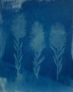 Lisa Shepherd, Textile illustrator and printer. Botanical Illustration, Botanical Art, Alternative Photography, Cyanotype, Textile Design, Printer, Illustrator, Bottlebrush, Lisa