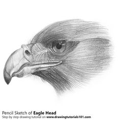 Pencil Drawing Tutorials Pencil Sketch of Eagle Head - Pencil Drawing Earth Drawings, Bird Drawings, Kawaii Drawings, Animal Drawings, Drawing Birds, Shading Drawing, Pencil Shading, Drawing Sketches, Pencil Drawing Inspiration