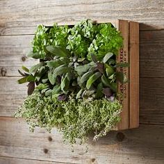 Gardening Gifts For Mom & Garden Mother's Day Gifts | Williams-Sonoma