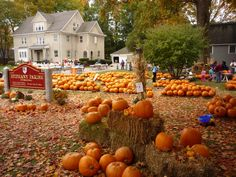 """OP says ~The Epiphany Parish of Walpole Pumpkin Patch is an amazing sight. A classic New England town (Walpole, Mass.), the Pumpkin Patch features thousands of pumpkins for sale. Everywhere you look, it's orange!"""" Love to see this! Pumpkins For Sale, New England Fall, Autumn Scenery, Fall Pictures, Cheap Travel, Fall Halloween, Halloween Pumpkins, Places To Go, Kids Places"""