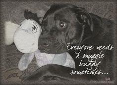 Remember, everyone needs a snuggle buddy sometimes...