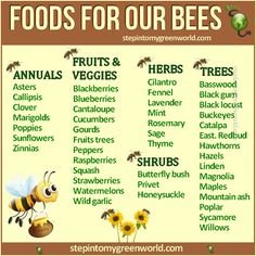 planning on getting bees and want to make sure I have plants to keep them healthy if they cannot find them elsewhere
