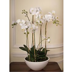 Shop for Artificial Flowers & Plants from our Home & Garden range at John Lewis. Plante Carnivore, Silk Orchids, Artificial Flowers And Plants, Orchid Arrangements, Decorative Accessories, Vintage Art, Tulips, Bulb, Home And Garden