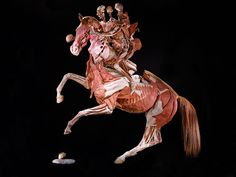 "Body Worlds' ""Rearing Horse with Rider"""