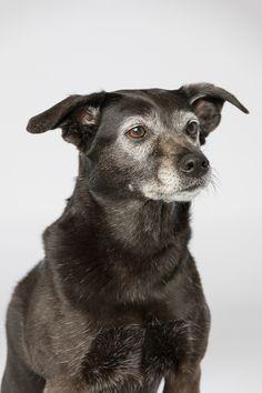 Spredningen av Corona er mer under kontroll. Men vi skal fortsatt være forsiktige. Jeg kommer derfor til å ha mest fokus på fotografering utendørs i tiden fremover. Og med den våren vi har nå så er ikke det så ille akkurat. Vi har vært bortskjemt med godt vær i lang tid og forhåpentligvis fortsetter  #hund #hundefotograf #staffordshirebullterrier Staffordshire Bull Terrier, Studio, Panther, Labrador Retriever, Fine Art, Dogs, Pictures, Animals, Labrador Retrievers