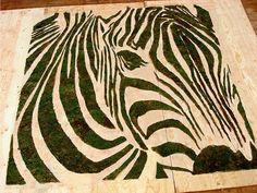 moss zebra EDINA TOKODI