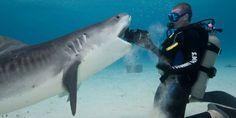 Les 32 plus belles photos du requin tigre