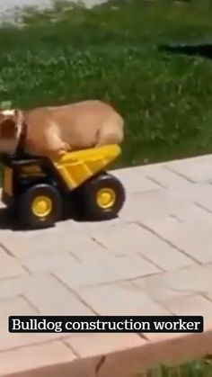 Cute Funny Dogs, Cute Funny Animals, Cute Animal Videos, Cute Animal Pictures, Cute Dogs And Puppies, Doggies, Sp2 Vw, Cute Little Animals, Animal Memes