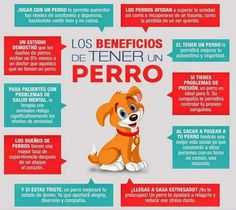 Los perros pueden ayudar a las personas diabéticas. Descubre cómo en... http://www.1001consejos.com/beneficios-de-tener-una-mascota/