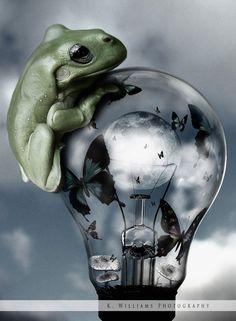 Frog #earthday