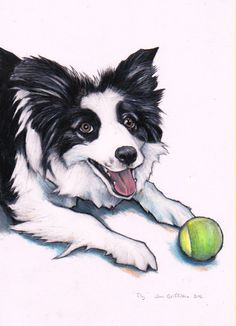 Border Collie custom drawing commission a by JimGriffithsArt