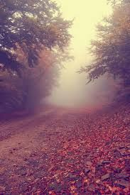 Walks in Nature (love the fog) Autumn Day, Autumn Leaves, Beautiful Places, Beautiful Pictures, Beautiful Forest, Cool Tumblr, Nature Pictures, Graphic, Nature Photography