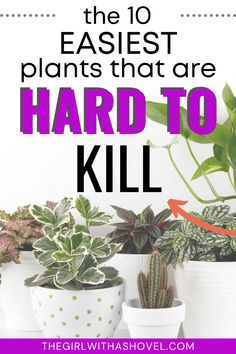 Are you a beginner plant parent? Or maybe you are a total plant killer?! Or maybe you just like easy, low-maintenance houseplants! Either way, this list of the 10 easiest plants that are hard to kill will give you plenty of houseplants to choose from! Bamboo Plant Care, Snake Plant Care, Lucky Bamboo Plants, Best Indoor Plants, Air Plants, Pothos Vine, Cast Iron Plant, Apartment Plants, Spider Plants