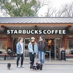 #genic_dog ・ ・ りなち、えりこちゃんと一緒に愛犬連れて上野集合❣ ・ ・ みんなワンコは黒揃い🐶✨ ・ ・ それぞれみんな個性があって可愛すぎた💓 ・ ・ blogにこの日の事書いたから良かったら見てねー🐶✨ ・ ・ そしてこの日、コーデ揃えたりしてなかったのにみんなdenim × blackリンクになってた👏✨ ・ ・ 偶然すごい😍❣ ・ ・ #starbucks#ueno#dog#dogstagram#genic_mag#genic_girl#tabijyo_cafe#doglovers#l4l#like4like#instagood#スターバックス#スタバ#愛犬#チワワ#ブラタン#チワワ部#デコログ#ミラーレス一眼#カメラ女子#女子カメラ#女子会#カメラ好きな人と繋がりたい#日産公式プロトラベラー#genic_japan
