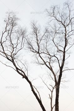 Tree ...  abstract, aged, alone, art, autumn, background, backgrounds, bare, bark, beautiful, black, bough, branch, branches, dark, dead, death, drought, dry, element, environment, forest, grey, high, isolated, isolation, landscape, light, lonely, natural, nature, old, one, outdoor, plant, scary, season, seasonal, silhouette, single, sky, solitude, tree, trunk, twig, weather, white, wild, wood, wooden