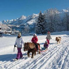 Poney luge, variante du ski Joëring à La Clusaz