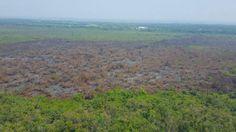 Honduras: Controlan fuego en el parque Jeannette Kawas  El comisionado de Copeco, Lisandro Rosales, informa que se ha controlado el incendio. El comisionado de Copeco, Lisandro Rosales, compartió esta foto donde se ve que el incendio fue controlado.