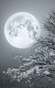 Winter Wonderland Christmas Snowy moon Mais