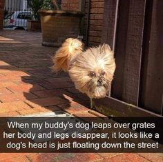 Funny Animal Picdump of The Day 178 (26 Photos) #funnymemes #funnypictures #humor #funnytexts #funnyquotes #funnyanimals #funny #lol #wtf #memes