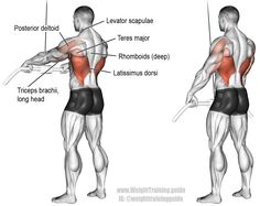 Cable straight arm pulldown. An isolation exercise. Target muscle: Latissimus Dorsi. Synergistic muscles: Teres Major, Lower Pectoralis Major, Pectoralis Minor, Posterior Deltoid, Levator Scapulae, Rhomboids, and Triceps Brachii (long head only).