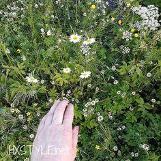 KESÄ LOMALLA...KOTIMAISIA/SUOMALAISIA....Nyt muistin KUVATA myös Ihania ❤LUONTO KUKKIA, PÄIVÄNKAKKAROITA Niityllä, Luonnon kukat. Löytyy Puistoista, Kaupungeista ja Tienvarsilta jne...Tykkään ja Nautin kaikenlaisista kukista. SUOSITTELEN. Nähdään...HYMY #kesä #loma #kukat #luonto #niitty #päivänkakkarat❤ #päivänkakkara #valokuvaus #luonnonkukat #tykkään #suosittelen ☺