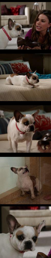 "french bulldog from ""modern family"" so cute. cute in black too"