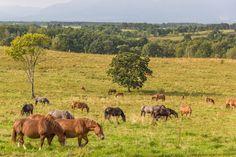 Ranch in fall by Hiroteru Hirayama on 500px