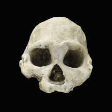 Image of skull; D3444 Dmanisi, Republic of Georgia, front view