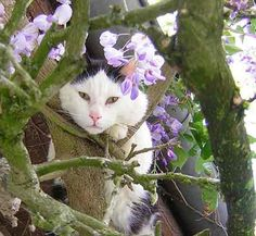 Climbing cat by Zenera. Cats love a garden (and this cat looks like another cousin of ours). Good guide here to keeping the garden safe for cats. I Love Cats, Cute Cats, Big House Cats, Cat Garden, Blue Garden, Summer Garden, Dream Garden, Cat Enclosure, Bad Cats