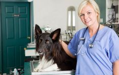 Keep an Eye on Your Dog's Health Between Vet Visits