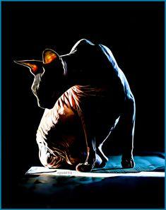 #silhouette #sfinx kissa #sphynx cat #dramatic light #sun light #colors #blue and orange #black background #photography #valokuvaus #digital art #cat #kissa #pet #lemmikkieläin #good and bad #cold and hot #poster #opposites #vastakohdat #hyvä ja paha #kylmä ja kuuma #valo ja musta #light and black Kissa, Cat Silhouette, Sphynx Cat, Digital Art, Batman, Superhero, Cats, Fictional Characters, Gatos