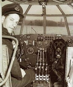 422 Squadron RCAF mascot, Straddle takes the co-pilot's seat in a Short Sunderland flying boat. 422 flew the massive Sunderlands on coastal and submarine patrols and Straddle was known to actually go on these patrols. In the left seat is Flight Lieutenant Lloyd Detwiller.