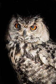 The Owl - by Matt Lindzon