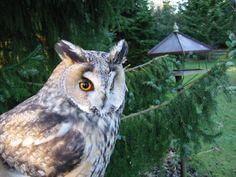 A closeup of the Owl