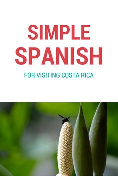 A Spanish Cheat Sheet. The most common words and phrases you'll need for your visit to Costa Rica. Saying hello, goodbye, asking for things, ordering in a restaurant, transportation, etc.