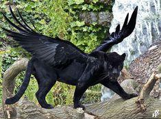 Panthera volans by https://dwarf4r.deviantart.com on @DeviantArt